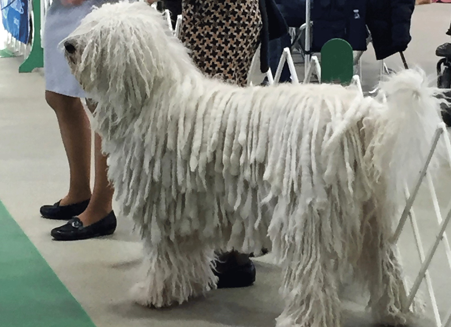 Logansport-Dog-Show-Auburn- Indiana